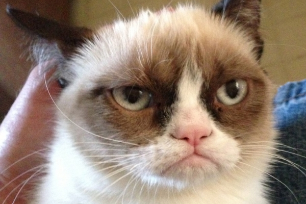 the popular grumpy cat now has some serious competition 19 pics 19