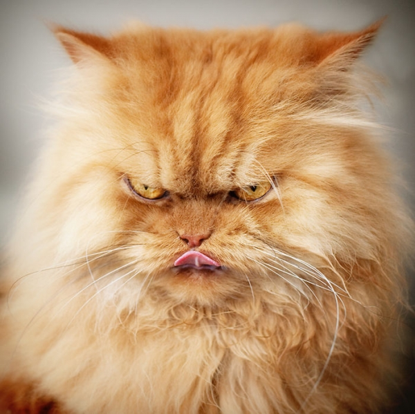 the popular grumpy cat now has some serious competition 19 pics 3