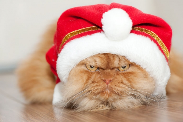 the popular grumpy cat now has some serious competition 19 pics 7