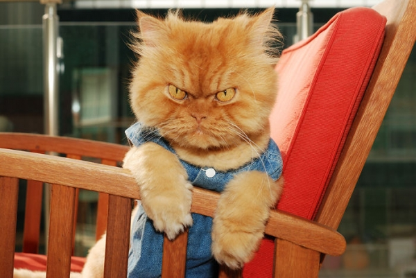 the popular grumpy cat now has some serious competition 19 pics 9