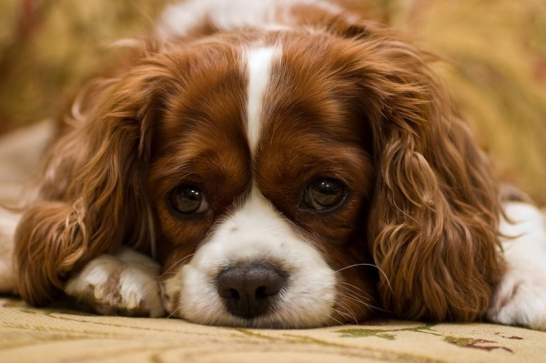 the power of puppy eyes 15 pictures 1