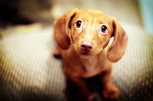 the power of puppy eyes 15 pictures 4