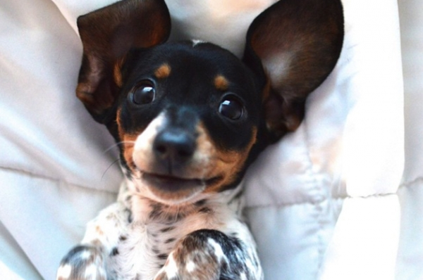 the power of puppy eyes 15 pictures 7