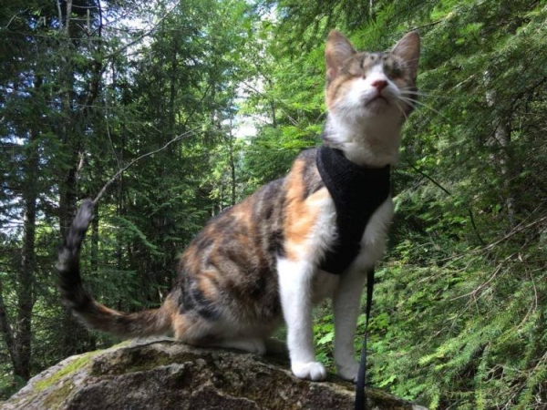 the spirit is strong in this blind but adventurous cat 10 pics 1 video 3
