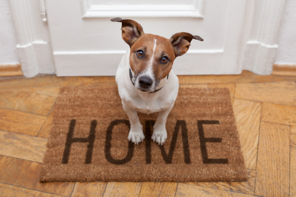 the steps you have to make before bringing your new pet home 4