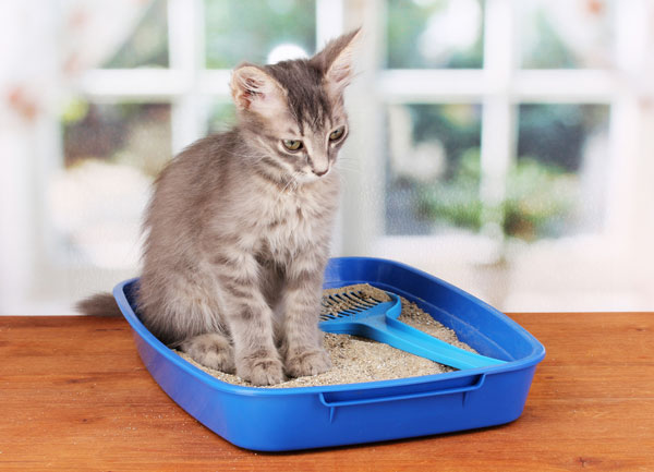 the steps you have to make before bringing your new pet home 9