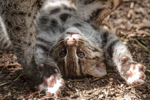 the strange kitten has shown a real face  10 pictures 7