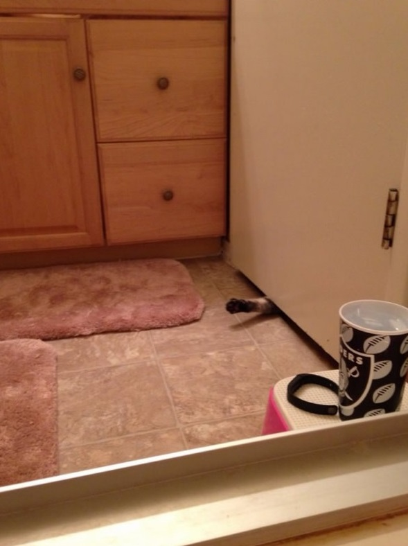 the struggle is real 26 things every cat owner goes through 10