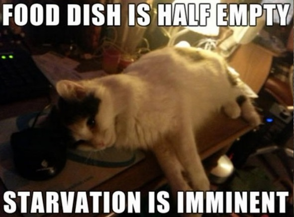 the struggle is real 26 things every cat owner goes through 13