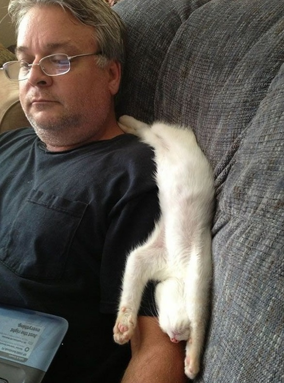 the struggle is real 26 things every cat owner goes through 19
