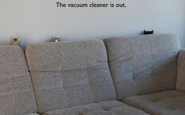 the struggle is real 26 things every cat owner goes through 23