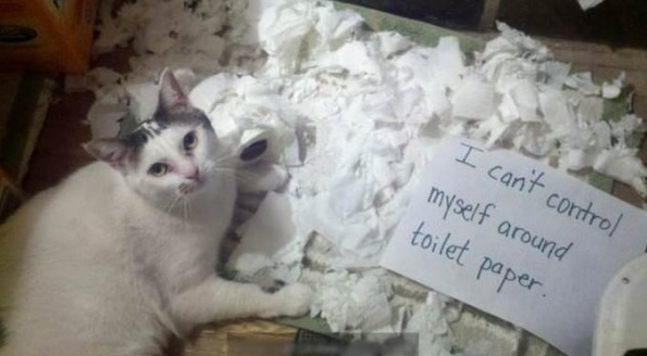 the struggle is real 26 things every cat owner goes through 7