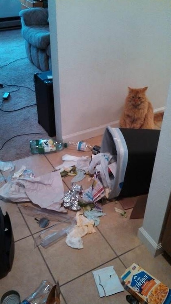 the struggle is real 26 things every cat owner goes through 9