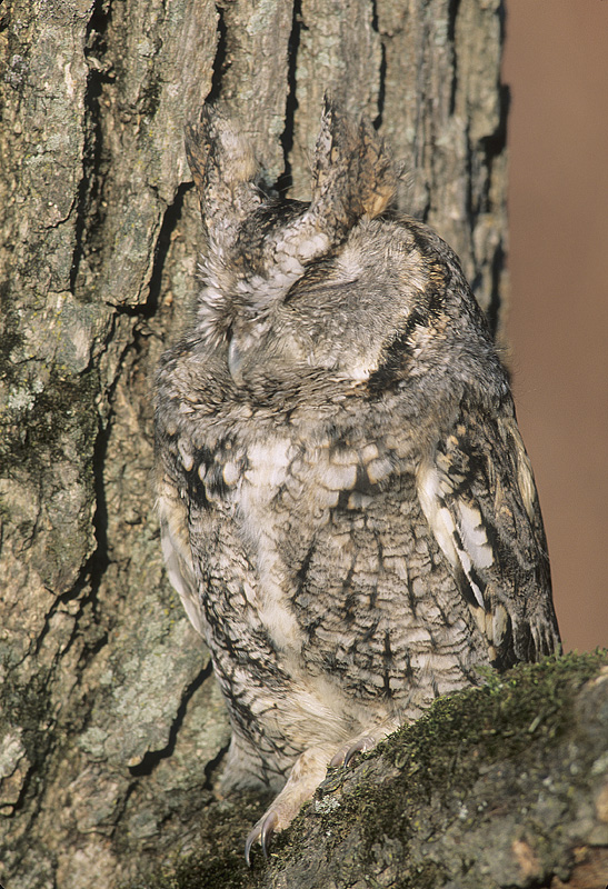 the unlikely masters of camouflage 12 pics 1