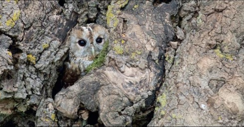 the unlikely masters of camouflage 12 pics 10