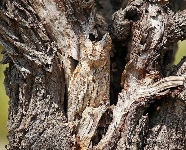 the unlikely masters of camouflage 12 pics 12