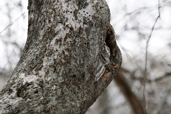 the unlikely masters of camouflage 12 pics 3
