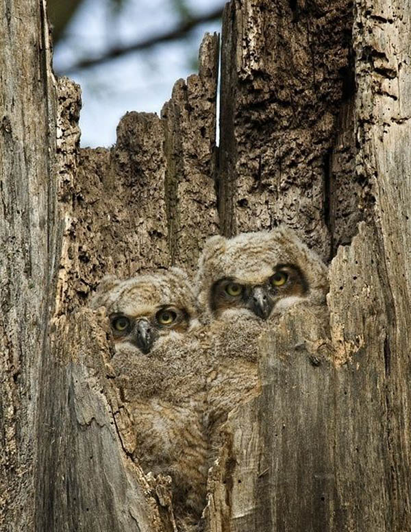 the unlikely masters of camouflage 12 pics 9