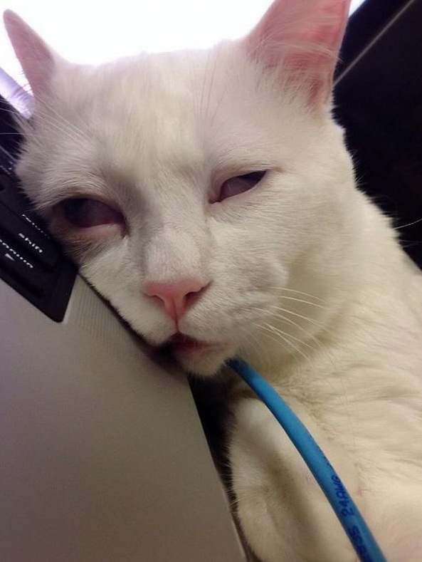 the worst sleepy face in animal world ever 8 pictures 6