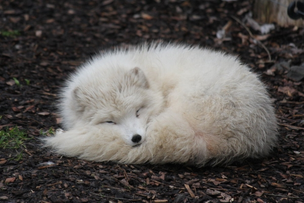 their fluff will melt your heart 13 pictures 6