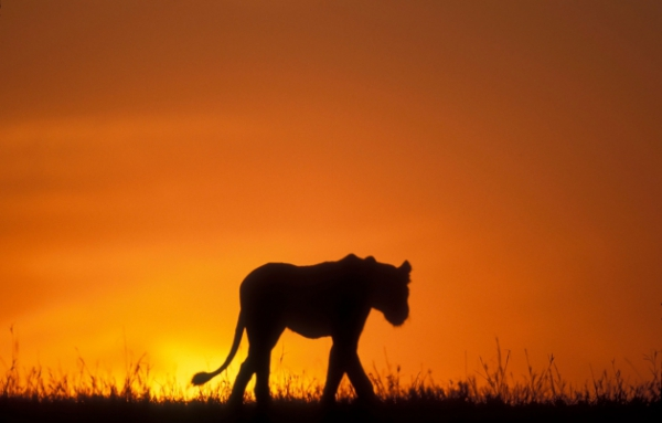 there is something that all animal photographers share 10 pictures 8