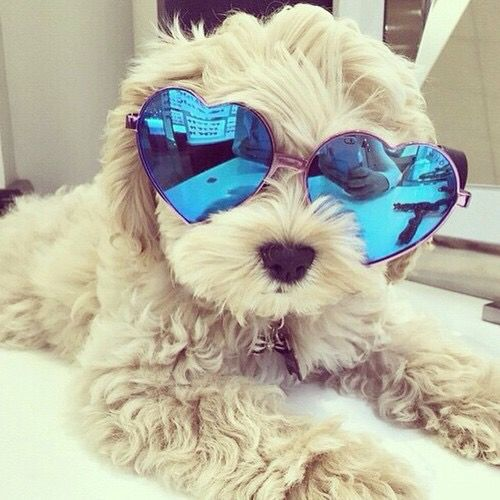 these adorable little ones are definitely up with the new trends  19 pictures 1