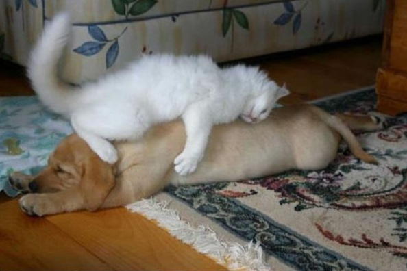these are definitely the most adorable sleeping buddies 22 pics 1