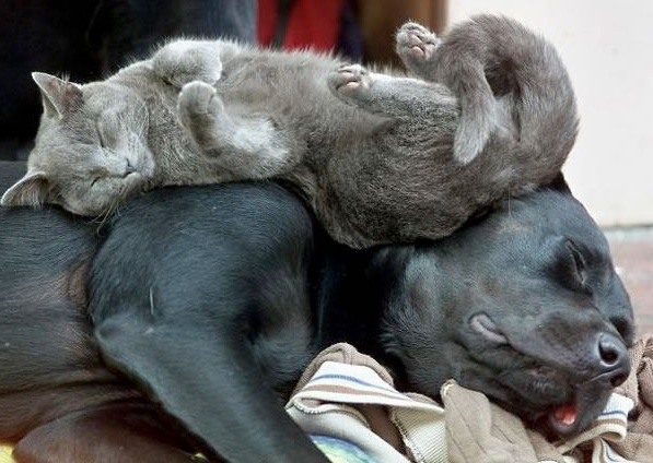 these are definitely the most adorable sleeping buddies 22 pics 11
