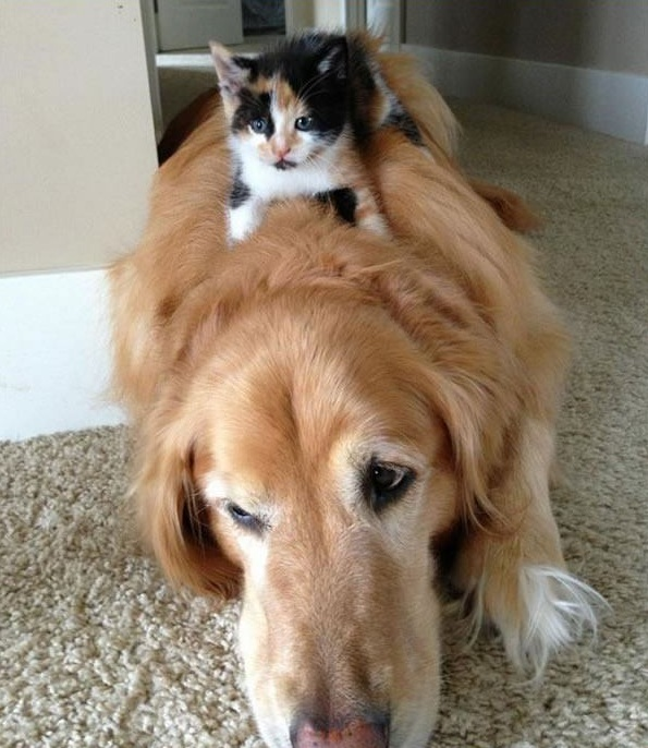 these are definitely the most adorable sleeping buddies 22 pics 16