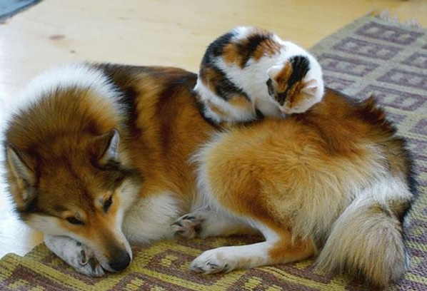 these are definitely the most adorable sleeping buddies 22 pics 17