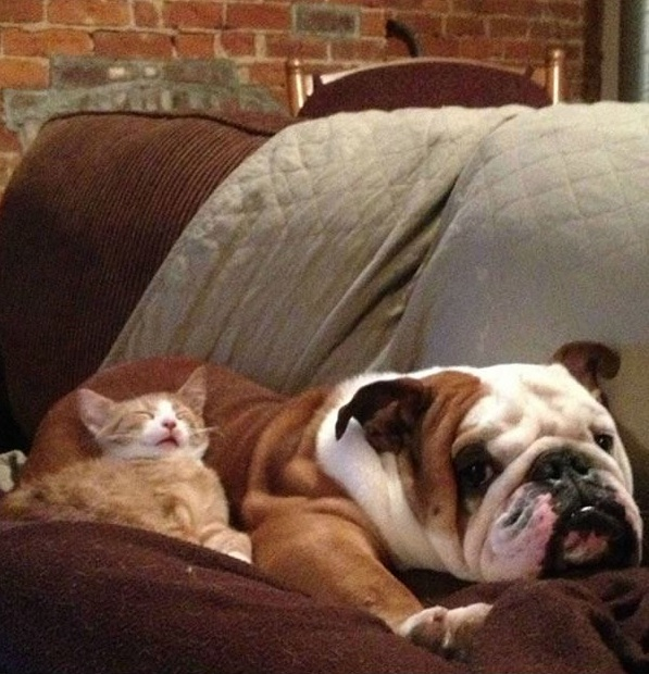 these are definitely the most adorable sleeping buddies 22 pics 22