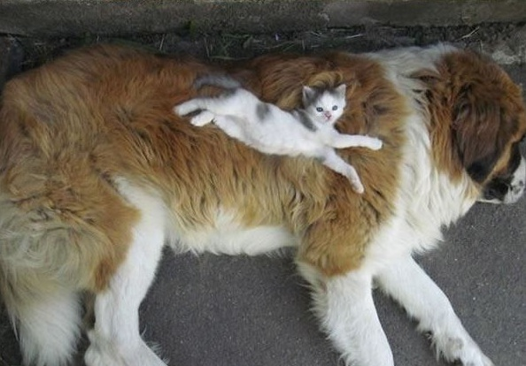 these are definitely the most adorable sleeping buddies 22 pics 5
