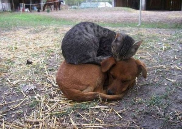 these are definitely the most adorable sleeping buddies 22 pics 7