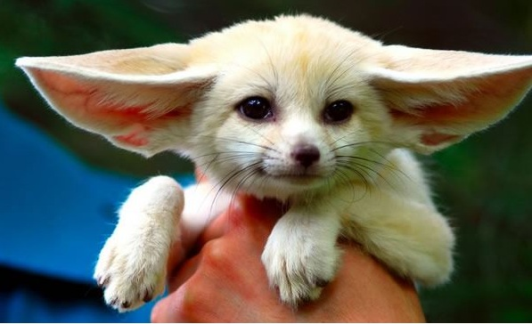 these cuties with big ears surely wont leave you indifferent 9 pics 1