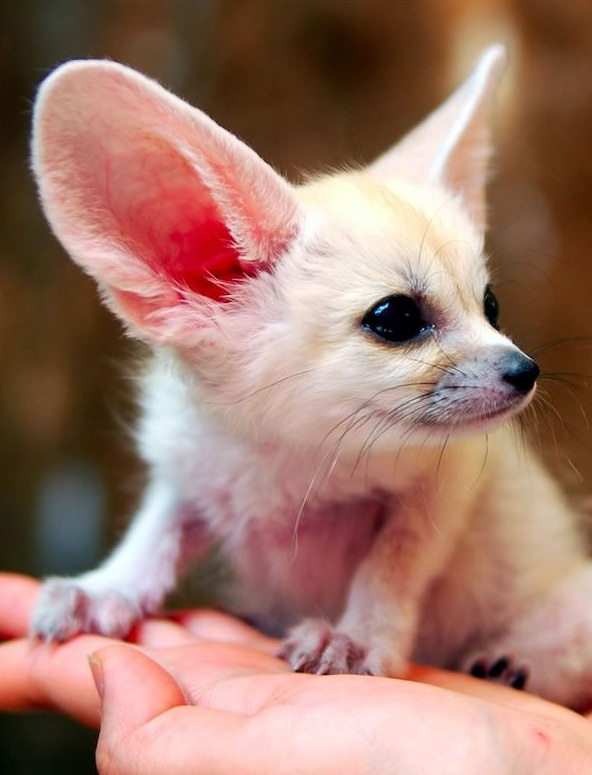 these cuties with big ears surely wont leave you indifferent 9 pics 4