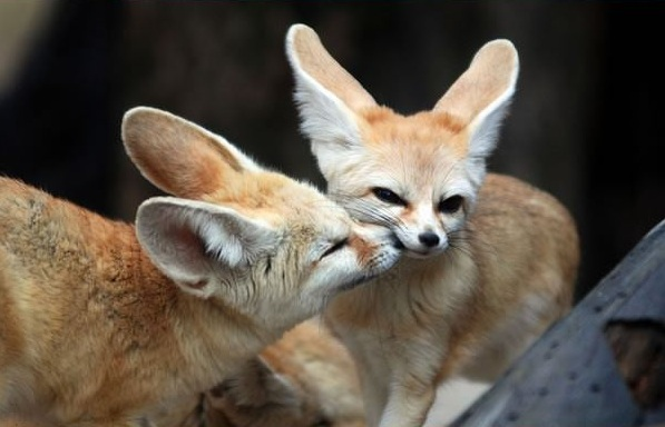 these cuties with big ears surely wont leave you indifferent 9 pics 5