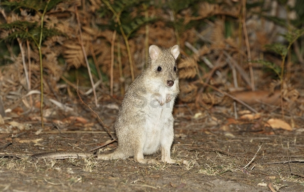these nearly extinct little guys are just looking for love 10 pictures 1