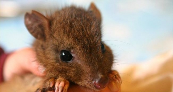 these nearly extinct little guys are just looking for love 10 pictures 4