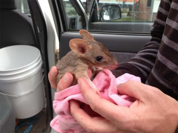 these nearly extinct little guys are just looking for love 10 pictures 5