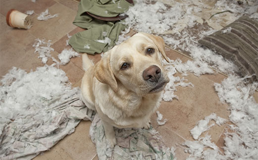 these pets are messy but still too cute 17 pictures 1