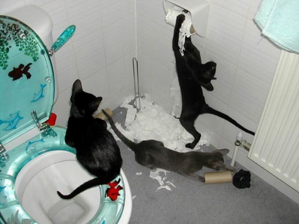 these pets are messy but still too cute 17 pictures 12