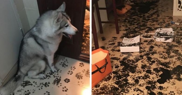these pets are messy but still too cute 17 pictures 13