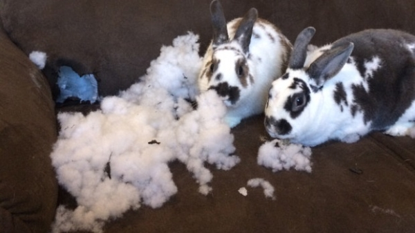 these pets are messy but still too cute 17 pictures 14
