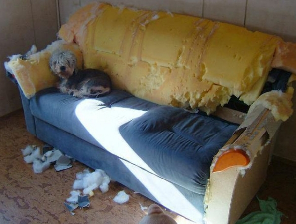these pets are messy but still too cute 17 pictures 2