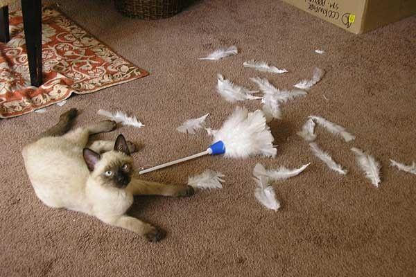 these pets are messy but still too cute 17 pictures 4