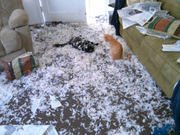 these pets are messy but still too cute 17 pictures 5