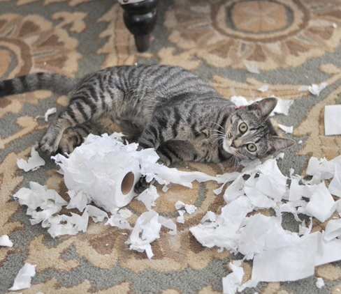 these pets are messy but still too cute 17 pictures 8