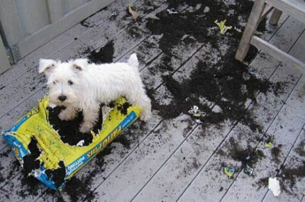 these pets are messy but still too cute 17 pictures 9