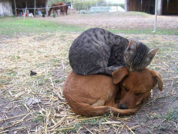 they dont need much some love and a warm place 16 pics 13