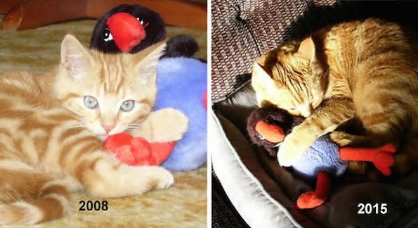 they just love their old toys 20 pictures 16